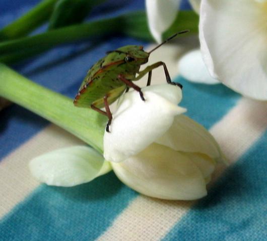 unusual bug